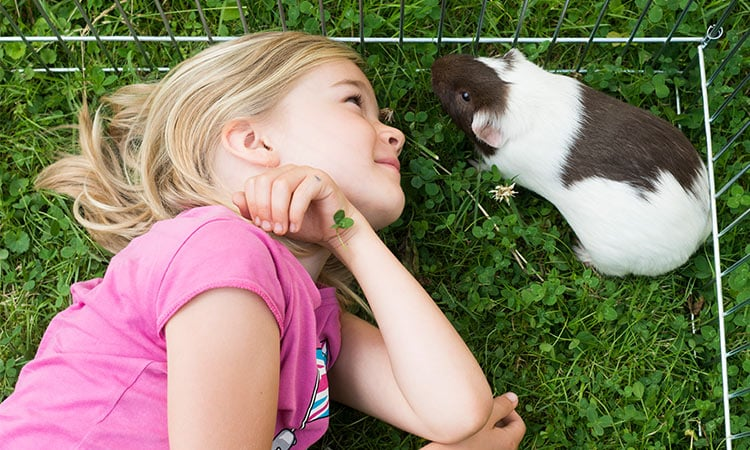 16-reasons-why-guinea-pig-make-great-pets