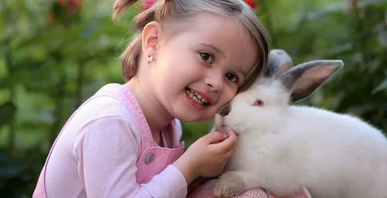 guinea-pig-or-rabbit-for-child