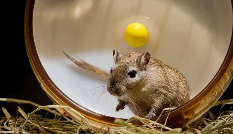 happy-gerbil
