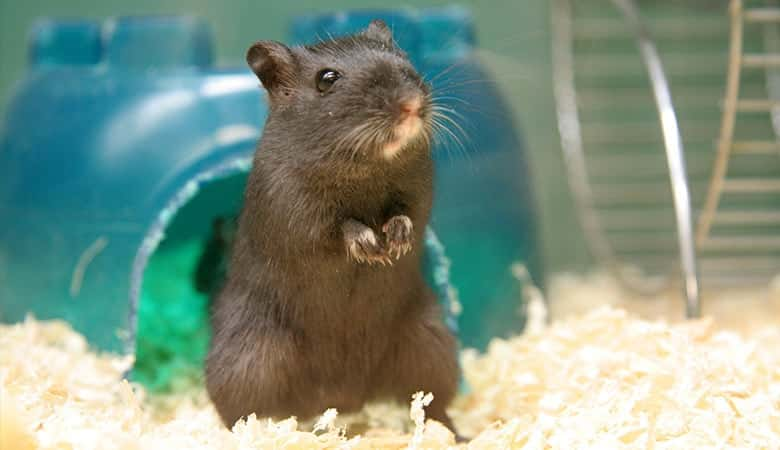 How-to-get-gerbil-to-stop-chewing-plastic