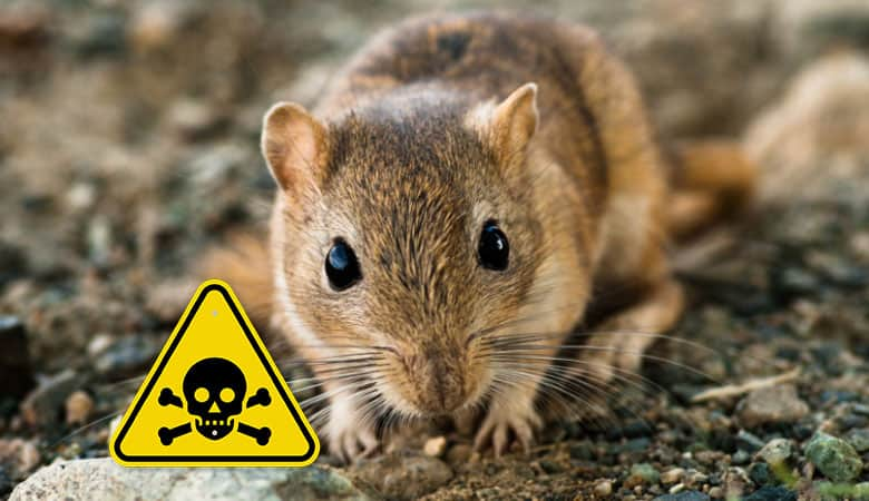what-is-poisonous-to-gerbils