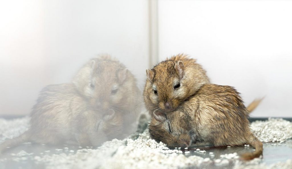 sand-in-gerbil-cage